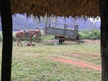 エクセルマクロ達人養成塾塾長ブログ-お馬さんは、ひと休み。