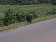 エクセルマクロ達人養成塾塾長ブログ-道中見かけた牛。